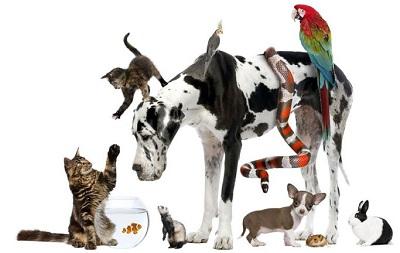 寵物的順勢療法處理